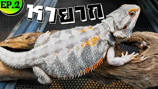National iguana farm EP.2