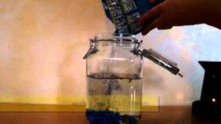 Build Your Own Ecosphere