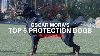 TOP 5 PROTECTION DOG BREEDS (NO SHEPHERDS): OSCAR MORA