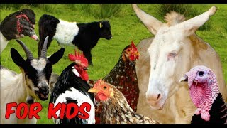 For Kids: RARE FARM ANIMALS - chicken, horse, cattle, goats, sheep, poultry, film for children