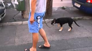 Ozi, puppy for adoption