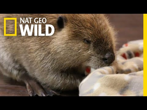 Rescued Animals Have a New Mission | Nat Geo Wild