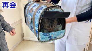 1日振りに病院で入院している猫と再会しました