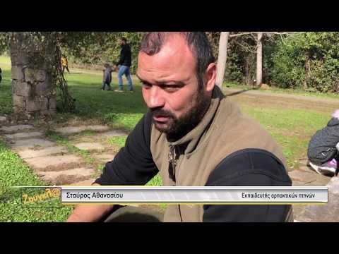 Ο εκπαιδευτής άγριων πουλιών Σταύρος Αθανασίου καταρρίπτει drones με τα γεράκια του