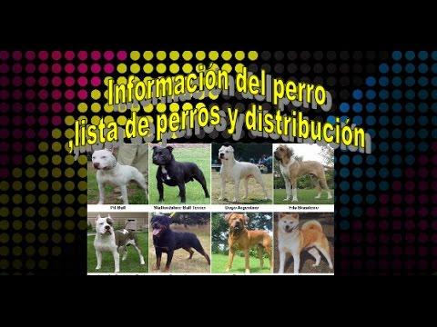Información del perro,distribución y lista de perros