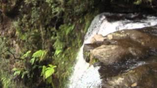 Video Agua Blanca de Iturbide.mov download MP3, 3GP, MP4, WEBM, AVI, FLV Oktober 2018