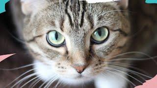 Сильный ритуал для здоровья домашних животных