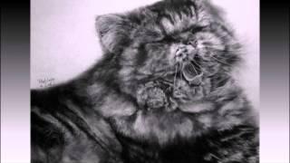 рисунки кошек простыми карандашом