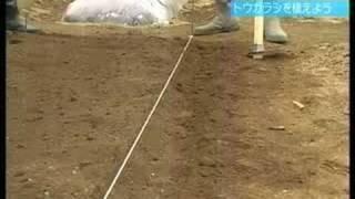 トウガラシを植えよう