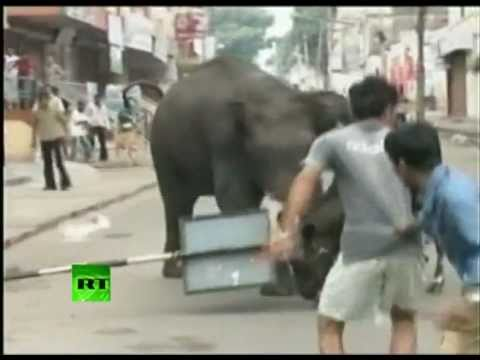 Rampage video: Wild elephants charge people, kill man in Mysore, India