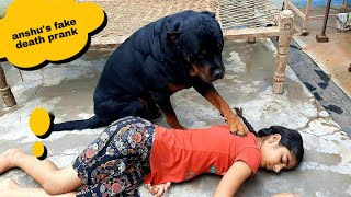 Fake death prank in front of my dog  dog reaction  cute dog  funny dog.