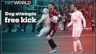 Dog just wants to take a free kick