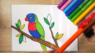 rainbow draw lorikeet drawing parrot easy coloring