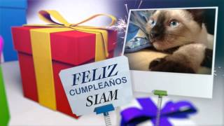 Felices 4 Meses Siam!!! - SiamCatChannel