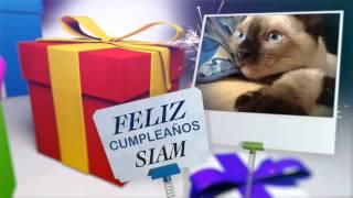 Felices 4 Meses Siam!!! - SiamCatChannel