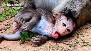 OMG, Baby Lizza Nearly Die Why Mom Monkey Lizzy Feel Angry With Baby Like This?, SO Sad For Lizza