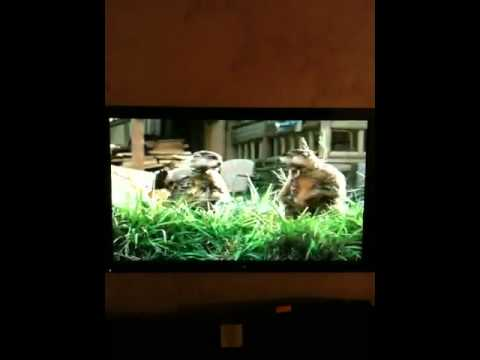Woodchuck Chucking Wood - GEICO - YouTube