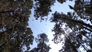 Flight of the Butterflies Trailer.mov