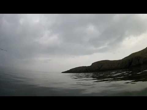 Shark In Amlwch, North Wales