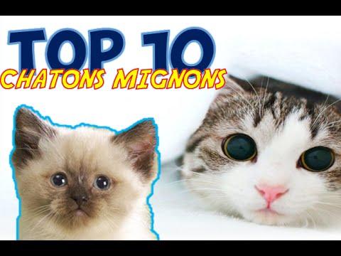 TOP 10 DES CHATONS LES PLUS MIGNONS !! [HD]