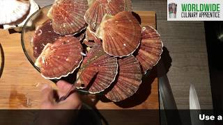How to clean Sea Scallops