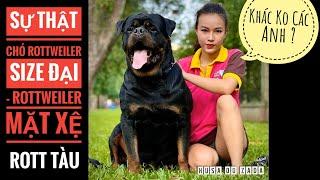 Sự Thật Về Chó Rottẁeiler Mặt Xệ/ Hay Rott Size Đại - Rott Tàu/ NhamTuatTV - Dog in Vietnam