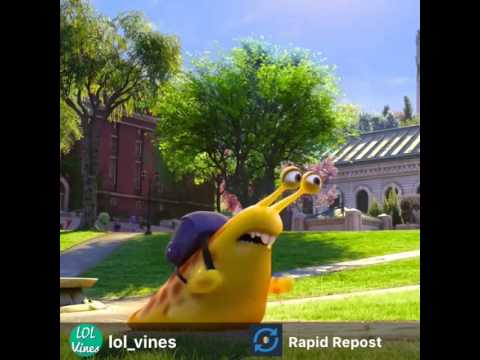 Snail Vine Youtube