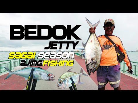 Bedok Jetty Fishing   Ajing Fishing   Sagai Season