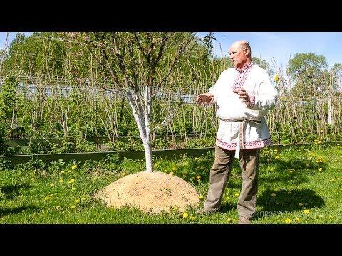 Экскурсия в малиновый рай в Псковской области