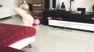 Malaysia Siberian Husky