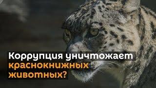 """""""Коррупция приводит к уничтожению краснокнижных животных — что скажет Совбез КР?"""""""