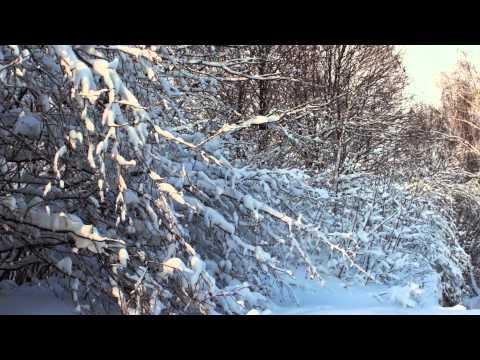 времена года песня на стихи Олега Танцюра,музыка и исполнение Олега Сапегина