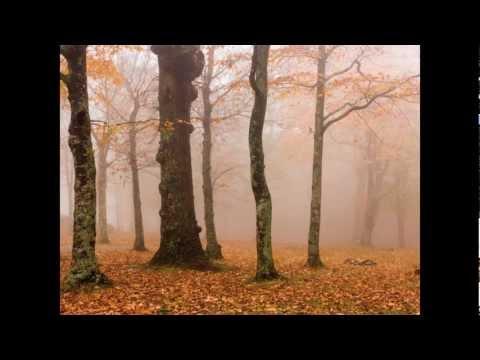 Chamber Symphony, Op. 110a - II. Allegro Molto