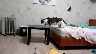 Ночной побег крысы!Кошка ловит...