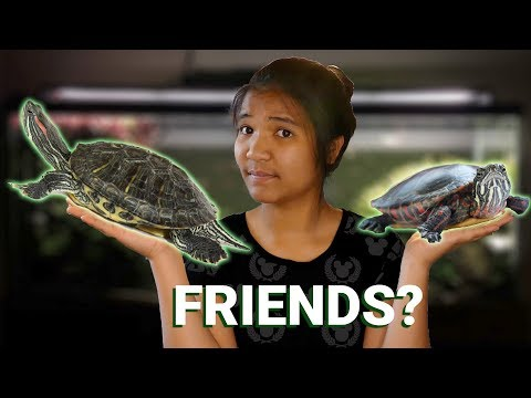 TWO Turtles In The SAME TANK?!? | Turtle Tankmates