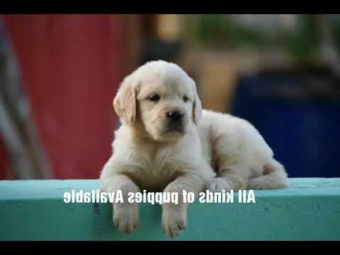Pet in Coimbatore