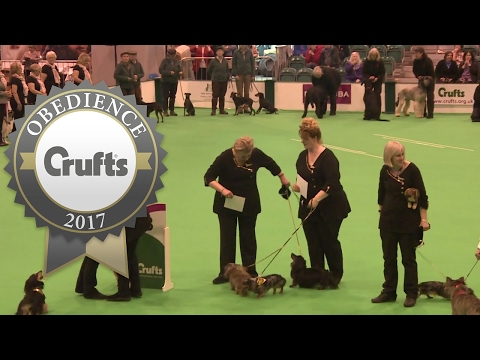 Obreedience - Award Presentation | Crufts 2017
