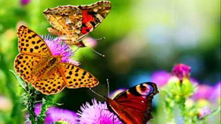 Oh Butterfly.wmv