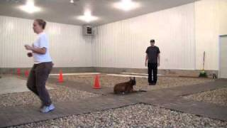 Norman (boxer) - Boot Camp Level Iii. Advanced Dog Training