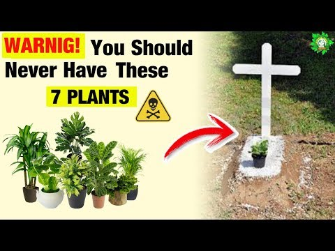 ⚠️7 Plants🌿 You Shouldn't Have In Your Home🏠
