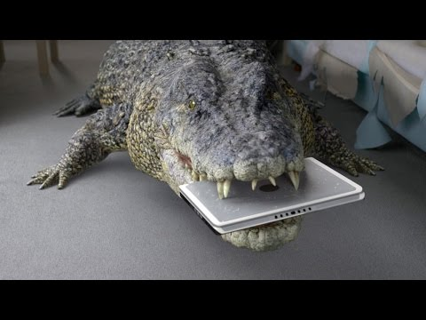 The Co-operative Bank -  Crocodile