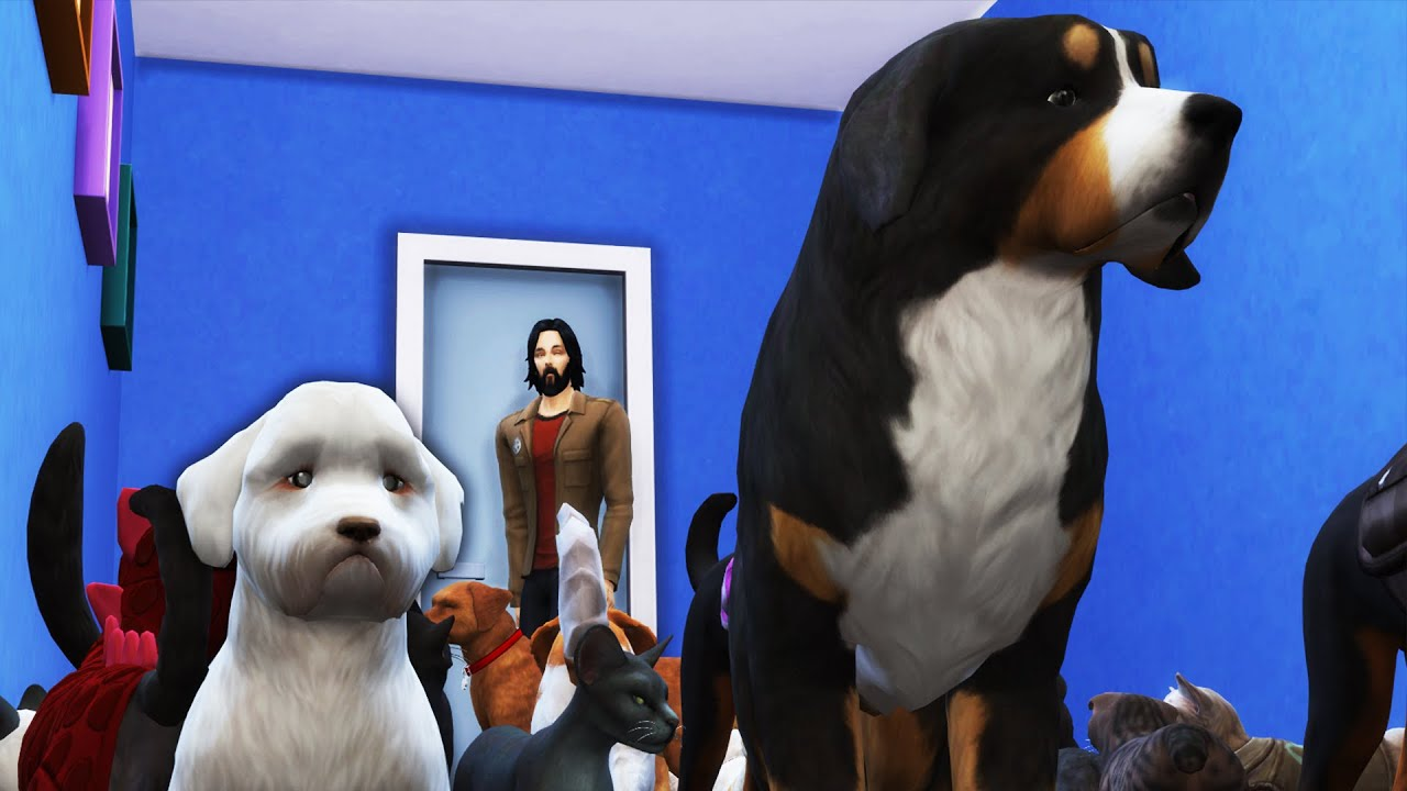 I Abducted Everyone's Pets and Ruined the Neighborhood in The Sims 4