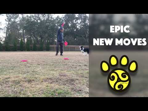 Epic New Disc Dog Freestyle Moves