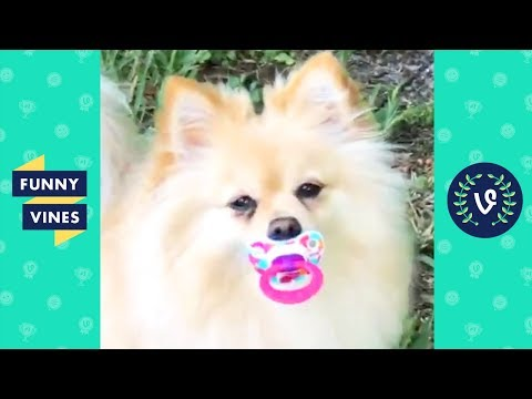 TRY NOT TO LAUGH – Funny Animals & Cute Pets Compilation | Funny Vines August 2018