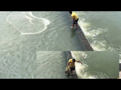 Ep3 Traditional Fishing Catching Different Kinds Of Fish Use Net | Dan Vals Tv