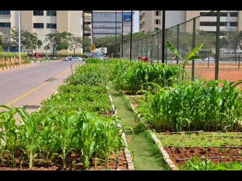 In this business park in Bangalore, office goers are office growers