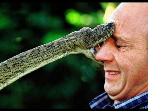 Bilderesultat for snake attack face