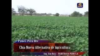 CHIA Y QUINUA AGRICULTURA COMPETITIVA  EN EL NORTE DEL PERU