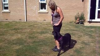 Obedience Heelwork  Training Uk - July 2009