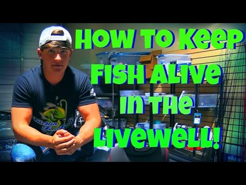 How to Keep Fish Alive in your Livewell! ~ New Pro Products